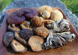medicinal-mushrooms-home