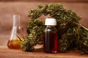 cannabis-flower-cbd-oil